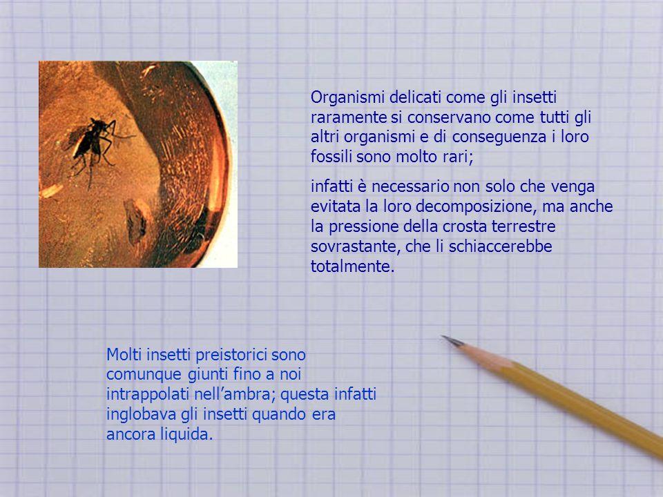 Organismi delicati come gli insetti raramente si conservano come tutti gli altri organismi e di conseguenza i loro fossili sono molto rari;