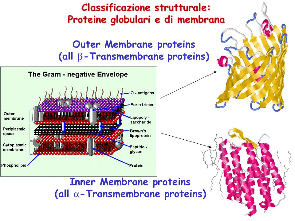 Classificazione strutturale: Proteine globulari e di membrana