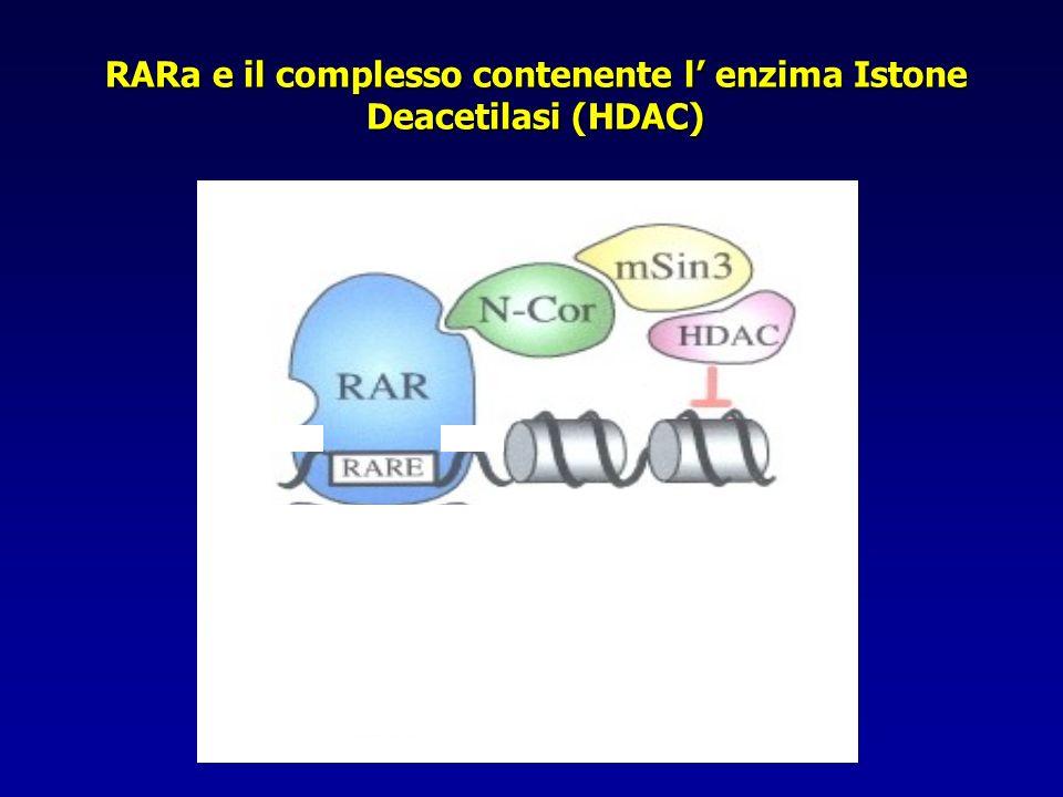 RARa e il complesso contenente l' enzima Istone Deacetilasi (HDAC)