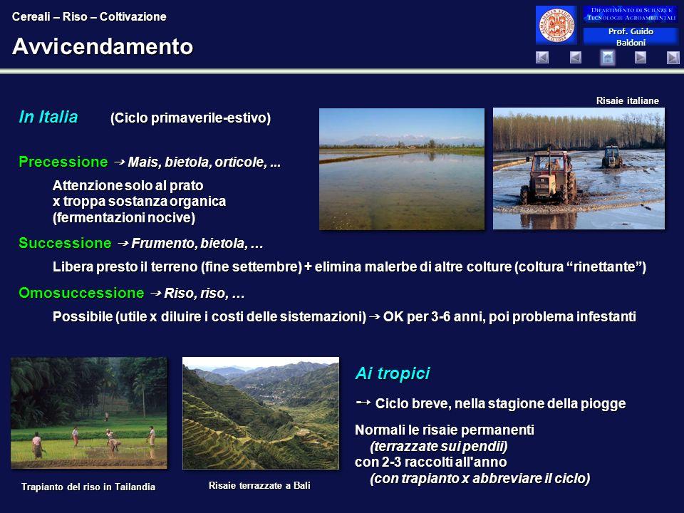 Avvicendamento In Italia (Ciclo primaverile-estivo) Ai tropici
