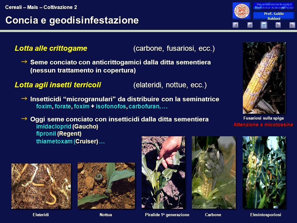 Concia e geodisinfestazione