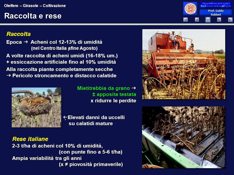 Raccolta e rese Raccolta Rese italiane