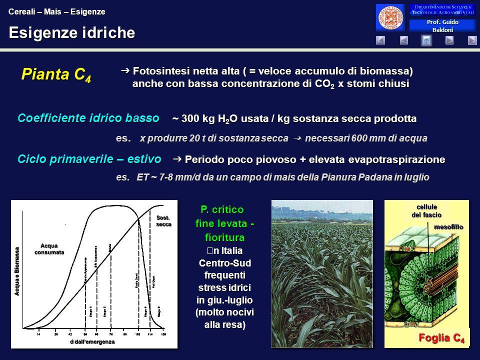 Esigenze idriche Pianta C4