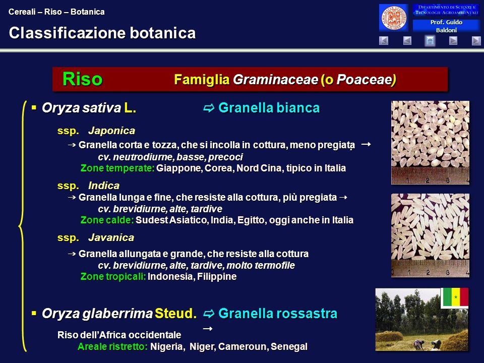 Classificazione botanica
