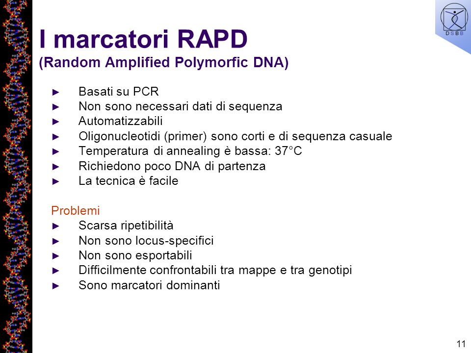 I marcatori RAPD (Random Amplified Polymorfic DNA)