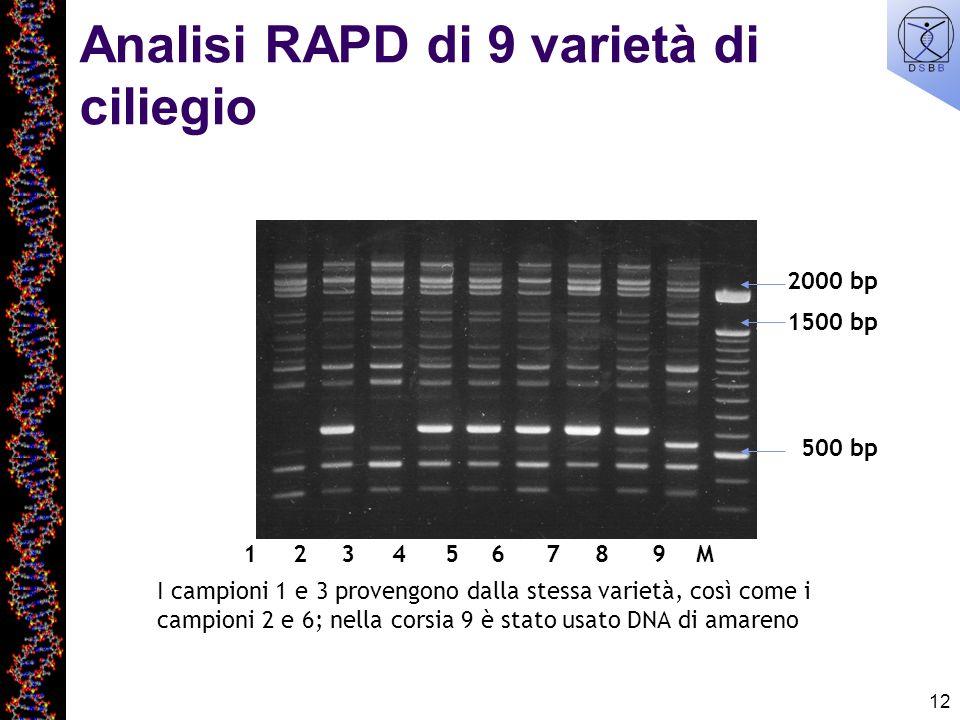 Analisi RAPD di 9 varietà di ciliegio