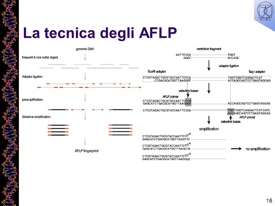 La tecnica degli AFLP