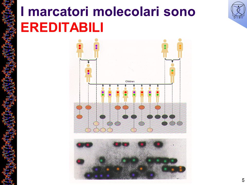 I marcatori molecolari sono EREDITABILI