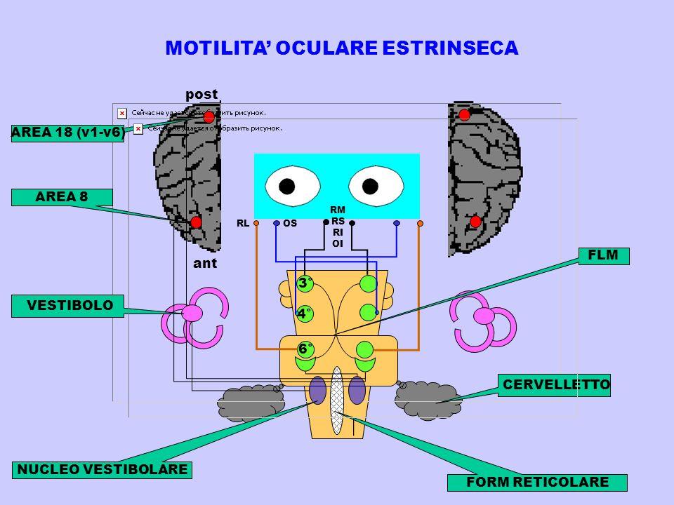 MOTILITA' OCULARE ESTRINSECA