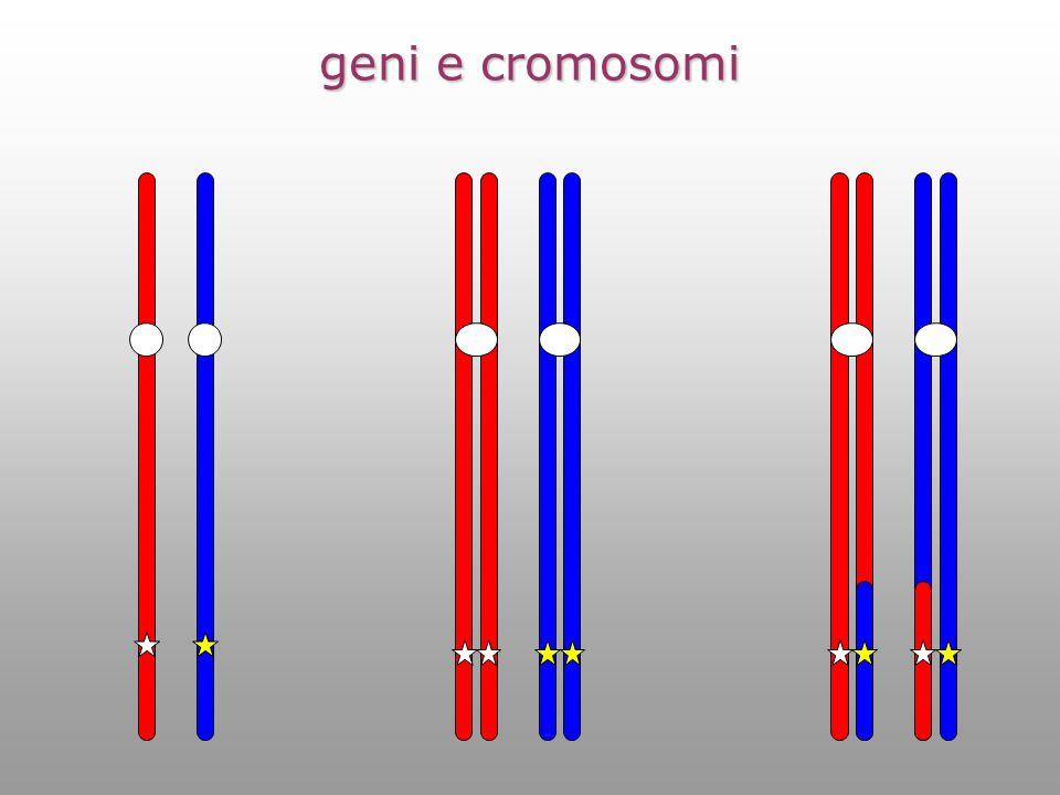geni e cromosomi
