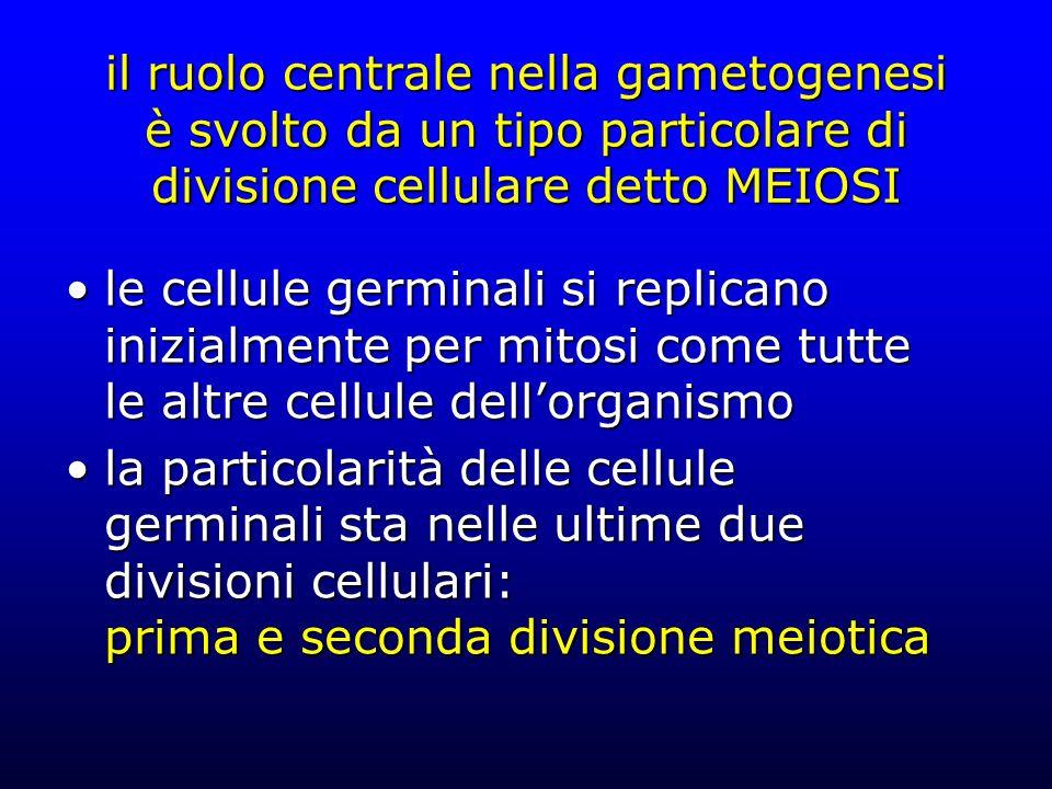 il ruolo centrale nella gametogenesi è svolto da un tipo particolare di divisione cellulare detto MEIOSI