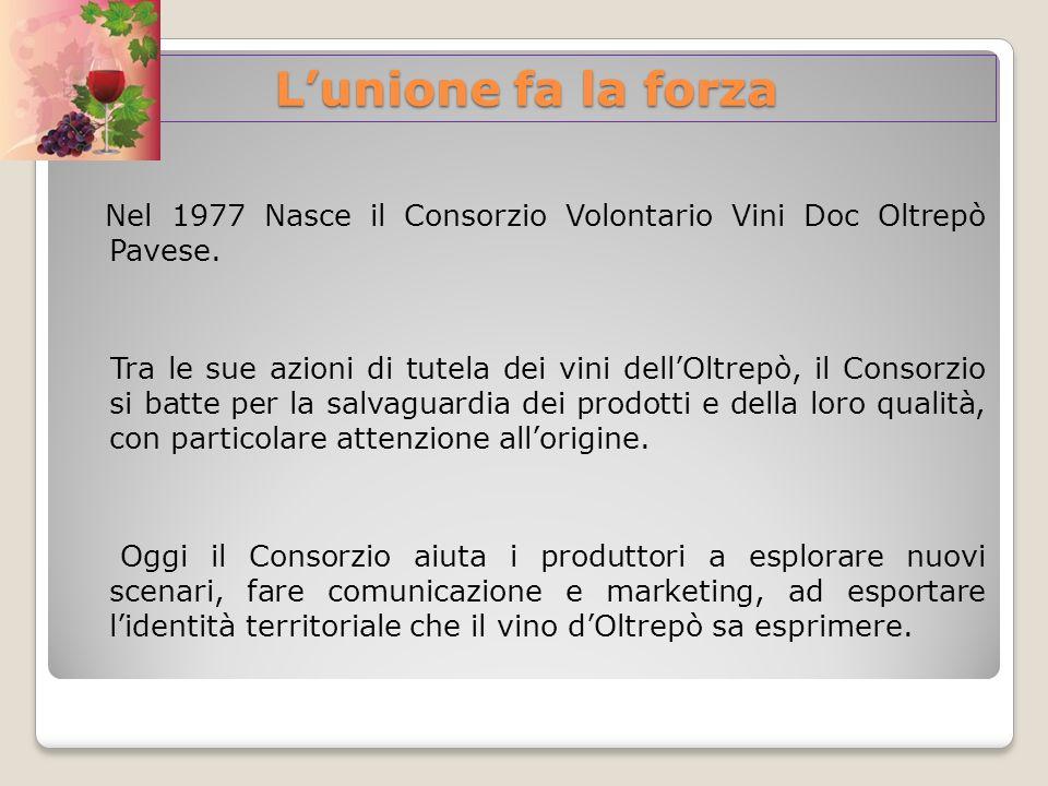 L'unione fa la forza Nel 1977 Nasce il Consorzio Volontario Vini Doc Oltrepò Pavese.