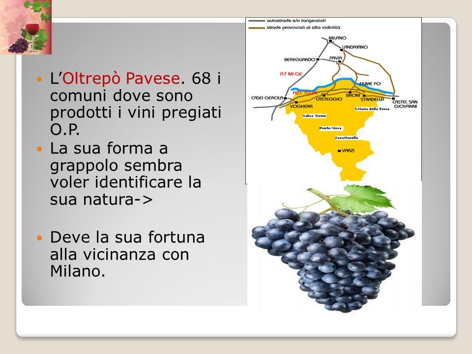 L'Oltrepò Pavese. 68 i comuni dove sono prodotti i vini pregiati O.P.