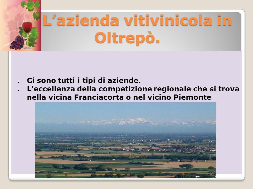 L'azienda vitivinicola in Oltrepò.