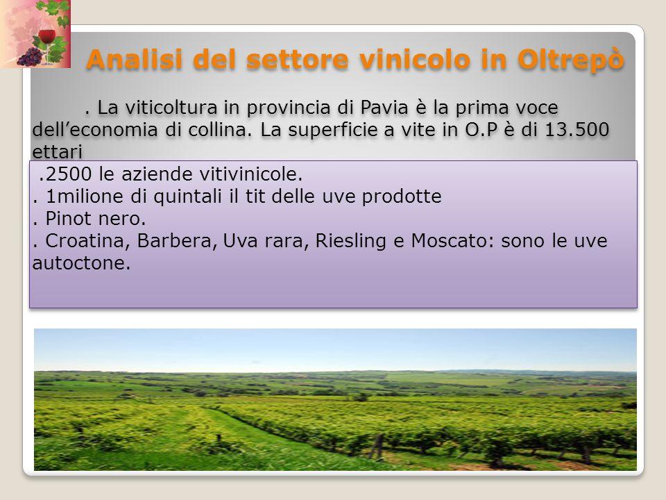 Analisi del settore vinicolo in Oltrepò