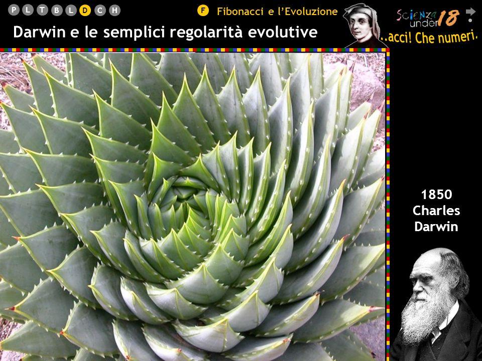 Darwin e le semplici regolarità evolutive