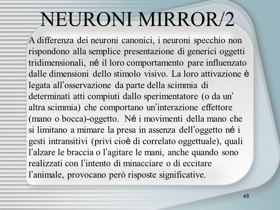 NEURONI MIRROR/2