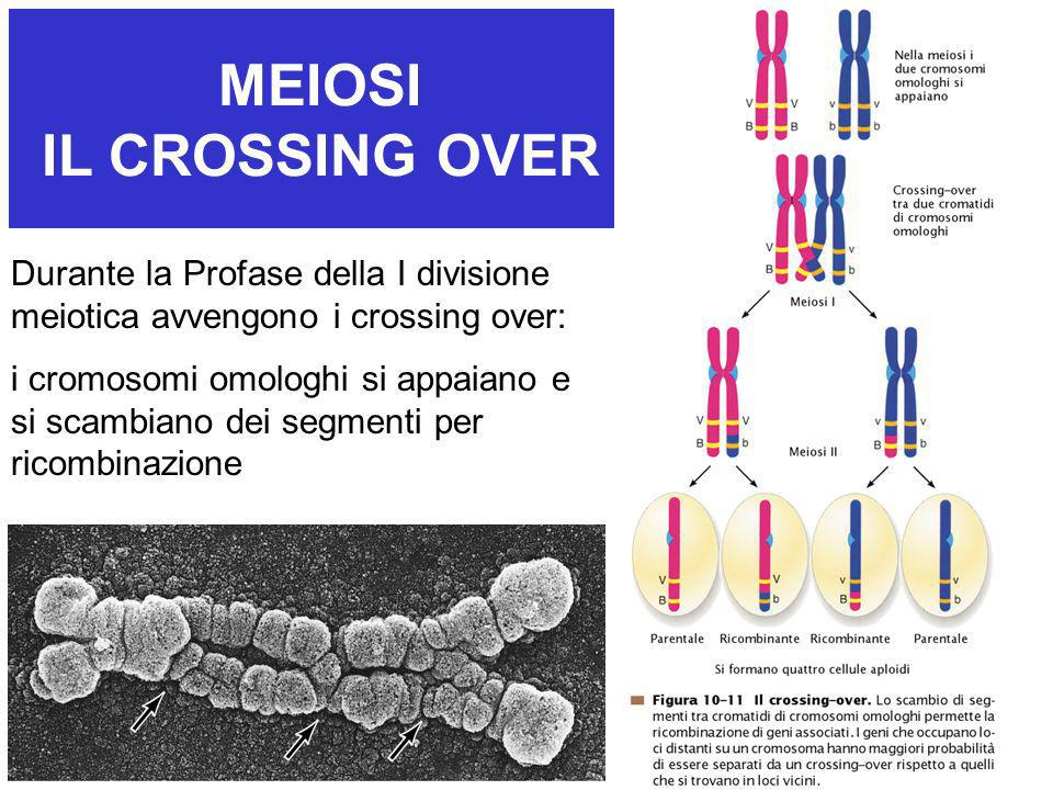 MEIOSI IL CROSSING OVER
