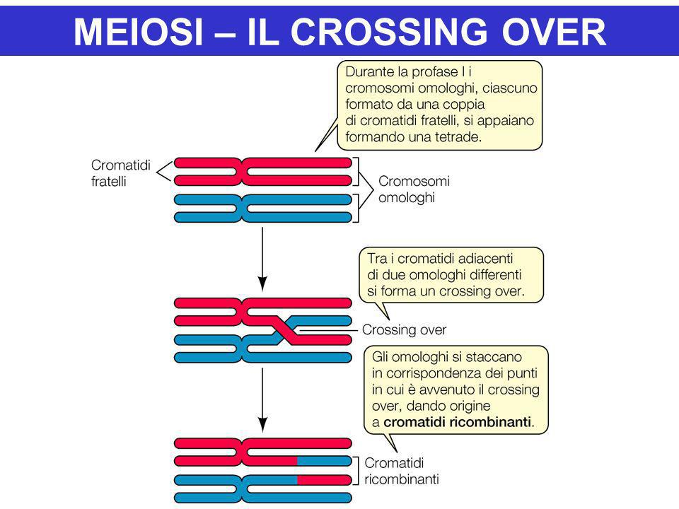 MEIOSI – IL CROSSING OVER