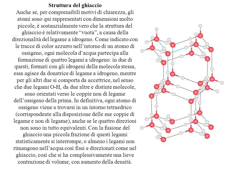 Struttura del ghiaccio Anche se, per comprensibili motivi di chiarezza, gli atomi sono qui rappresentati con dimensioni molto piccole, è sostanzialmente vero che la struttura del ghiaccio è relativamente vuota , a causa della direzionalità del legame a idrogeno.