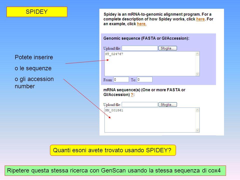 SPIDEY Potete inserire. o le sequenze. o gli accession number. Quanti esoni avete trovato usando SPIDEY