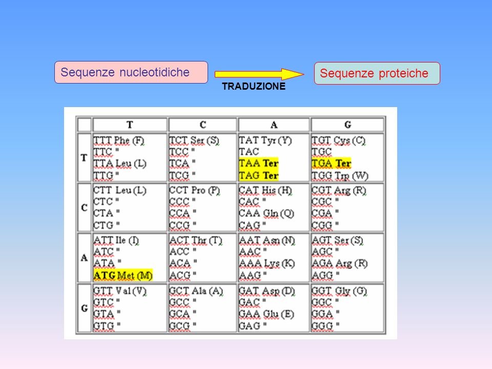 Sequenze nucleotidiche Sequenze proteiche