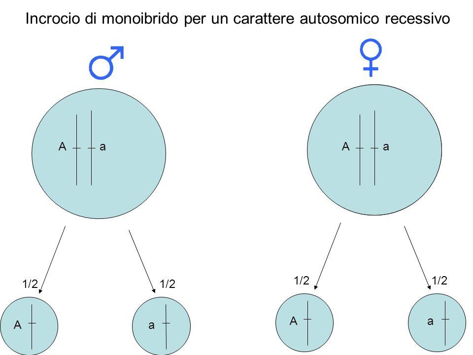 Incrocio di monoibrido per un carattere autosomico recessivo