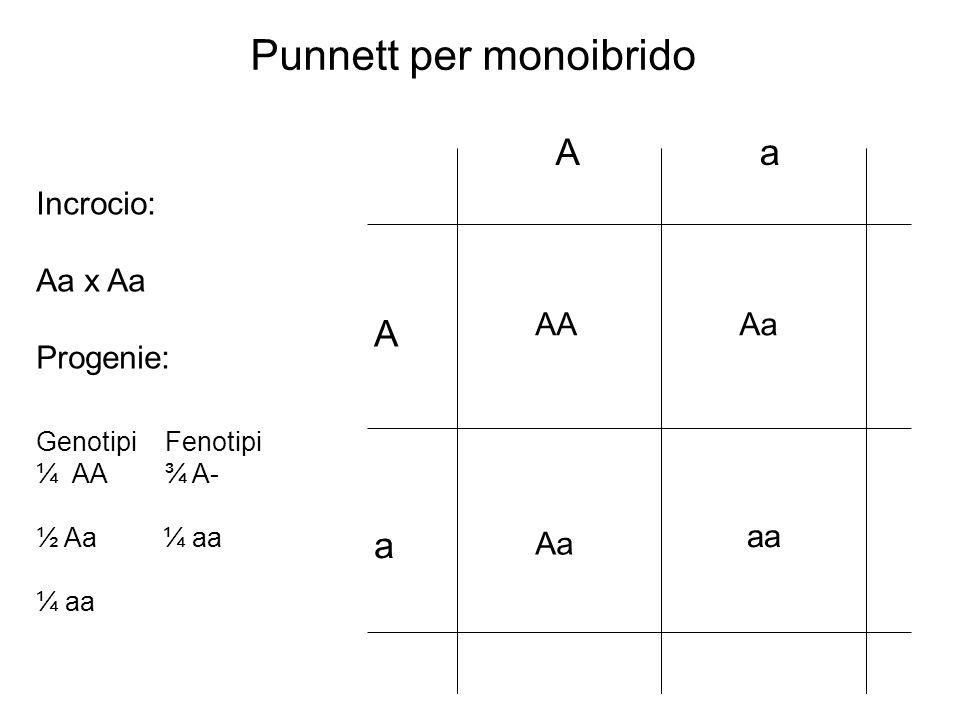 Punnett per monoibrido
