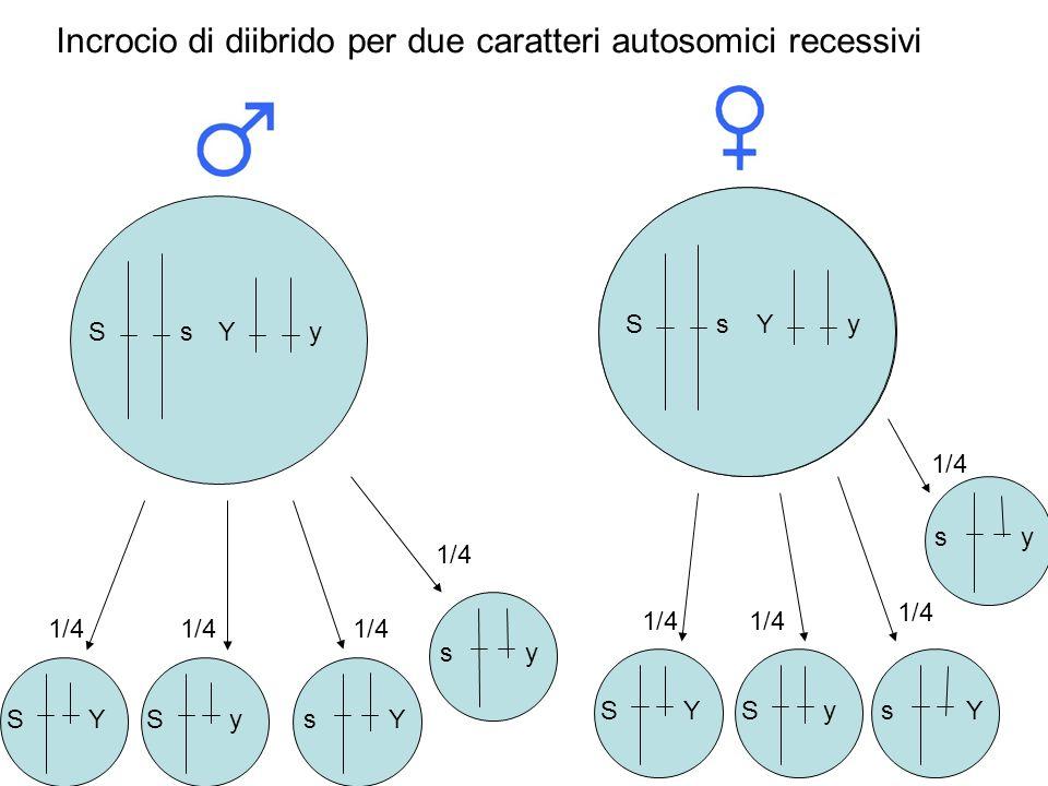 Incrocio di diibrido per due caratteri autosomici recessivi