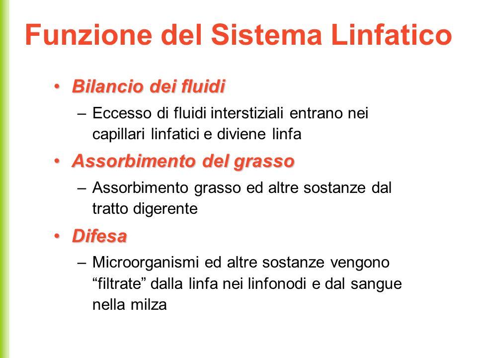 Funzione del Sistema Linfatico