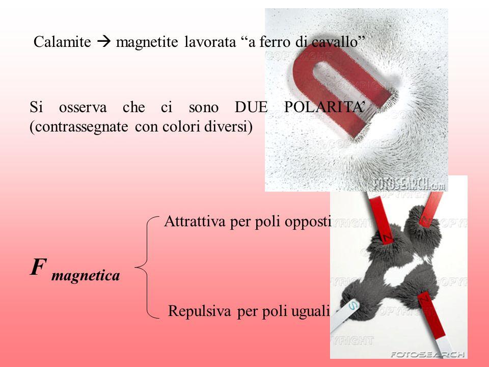 F magnetica Calamite  magnetite lavorata a ferro di cavallo