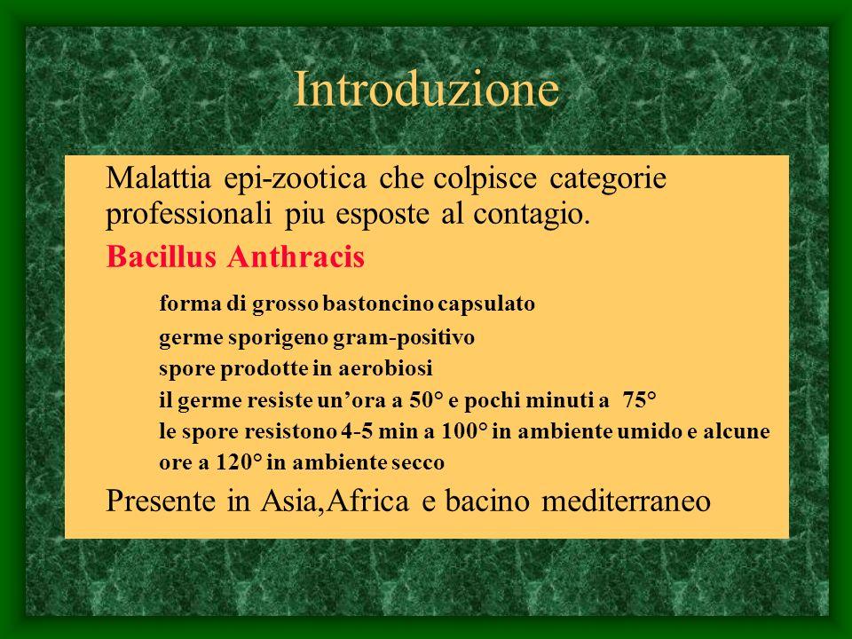 Introduzione Malattia epi-zootica che colpisce categorie professionali piu esposte al contagio. Bacillus Anthracis.
