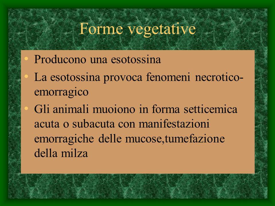 Forme vegetative Producono una esotossina