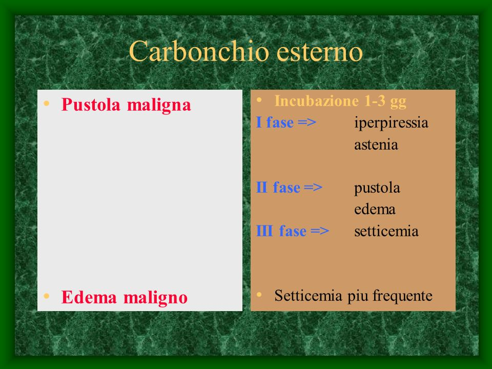 Carbonchio esterno Pustola maligna Edema maligno Incubazione 1-3 gg