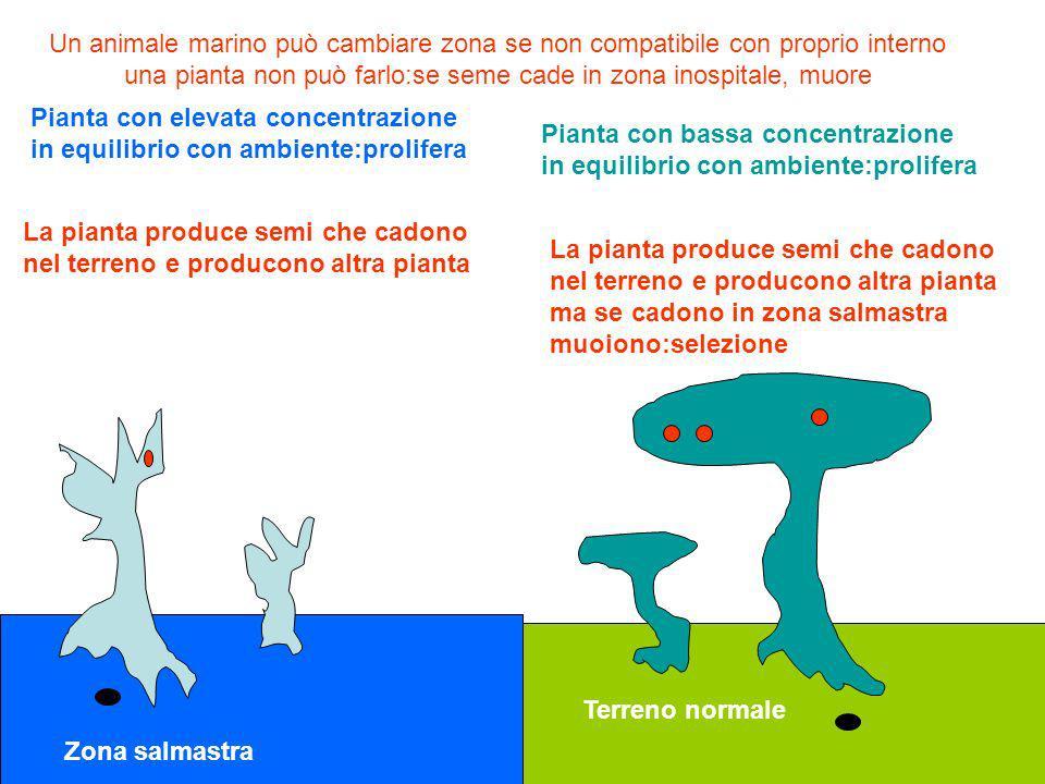 Un animale marino può cambiare zona se non compatibile con proprio interno una pianta non può farlo:se seme cade in zona inospitale, muore