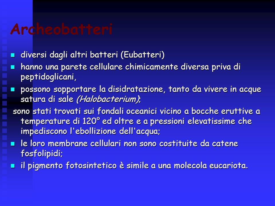 Archeobatteri diversi dagli altri batteri (Eubatteri)