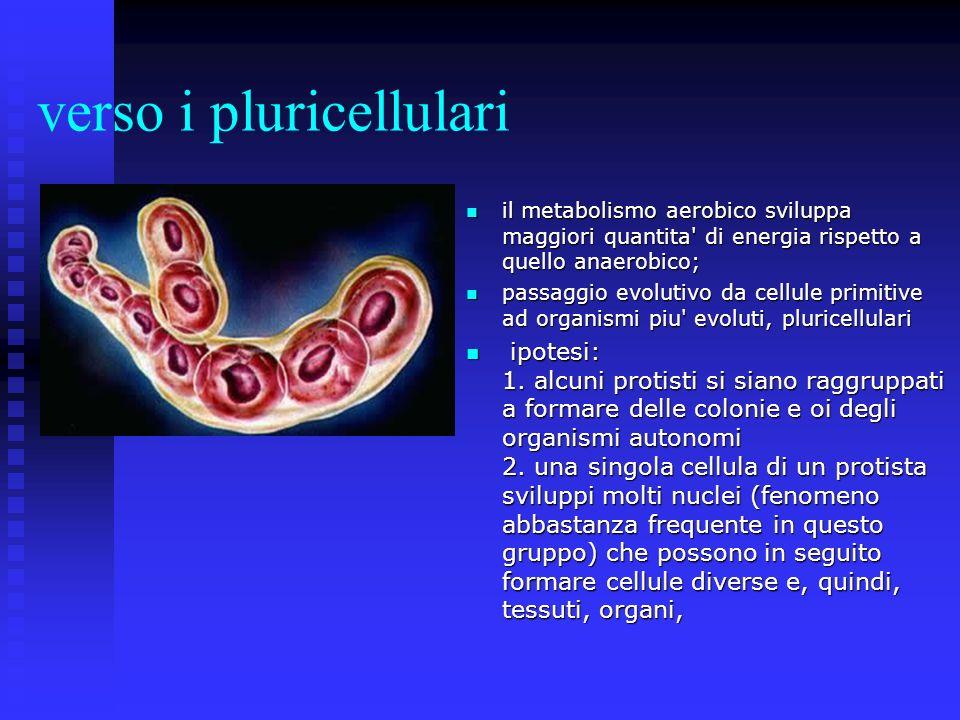 verso i pluricellulari