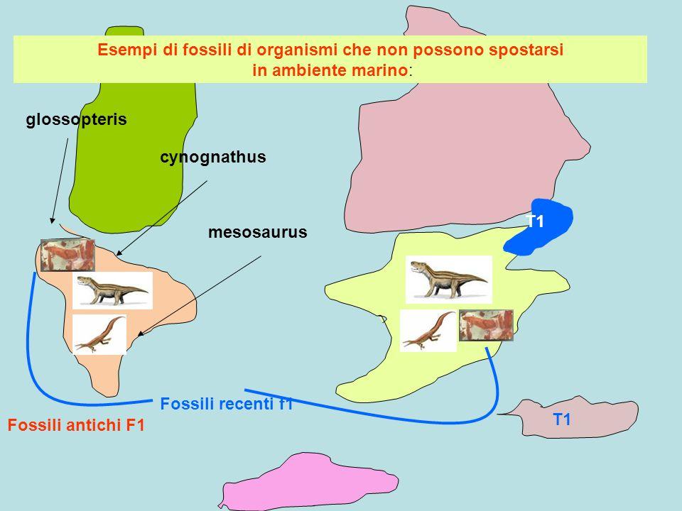 Esempi di fossili di organismi che non possono spostarsi in ambiente marino: