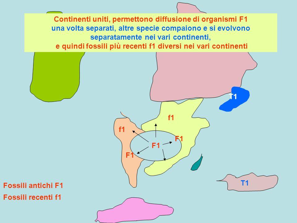 Continenti uniti, permettono diffusione di organismi F1 una volta separati, altre specie compaiono e si evolvono separatamente nei vari continenti, e quindi fossili più recenti f1 diversi nei vari continenti