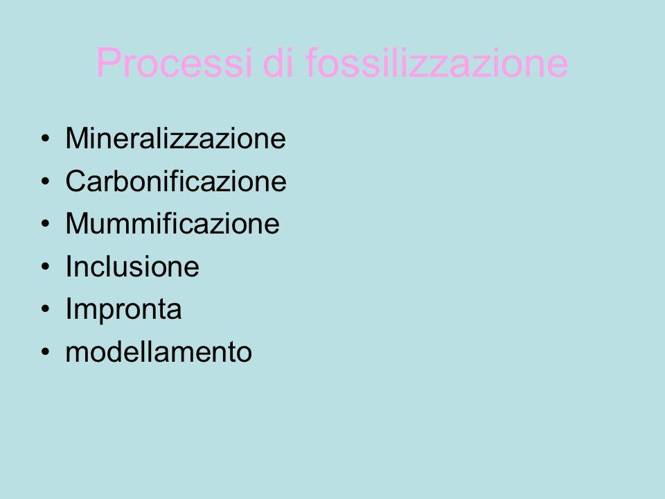 Processi di fossilizzazione