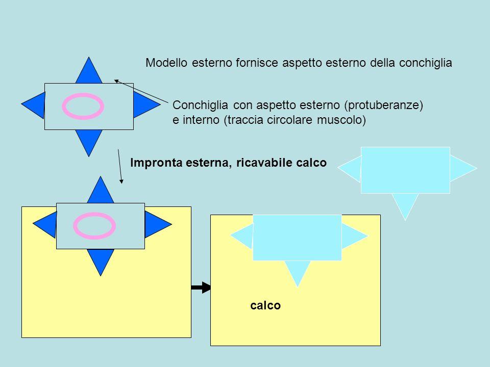 Modello esterno fornisce aspetto esterno della conchiglia