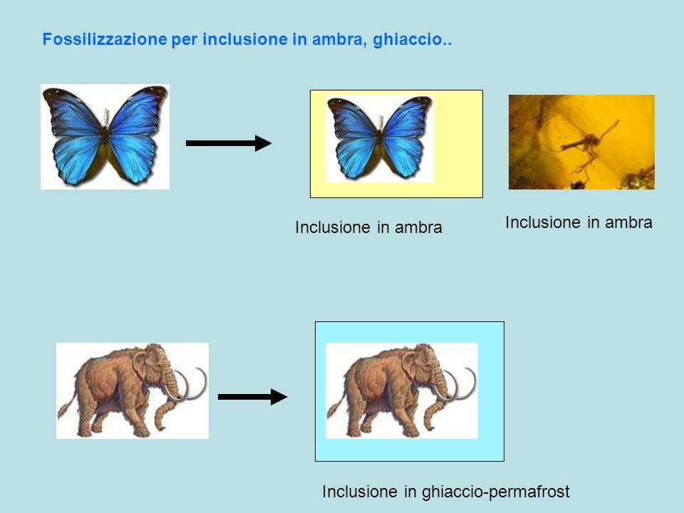 Fossilizzazione per inclusione in ambra, ghiaccio..