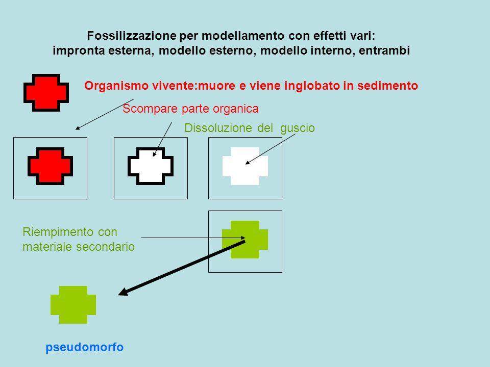 Fossilizzazione per modellamento con effetti vari: impronta esterna, modello esterno, modello interno, entrambi