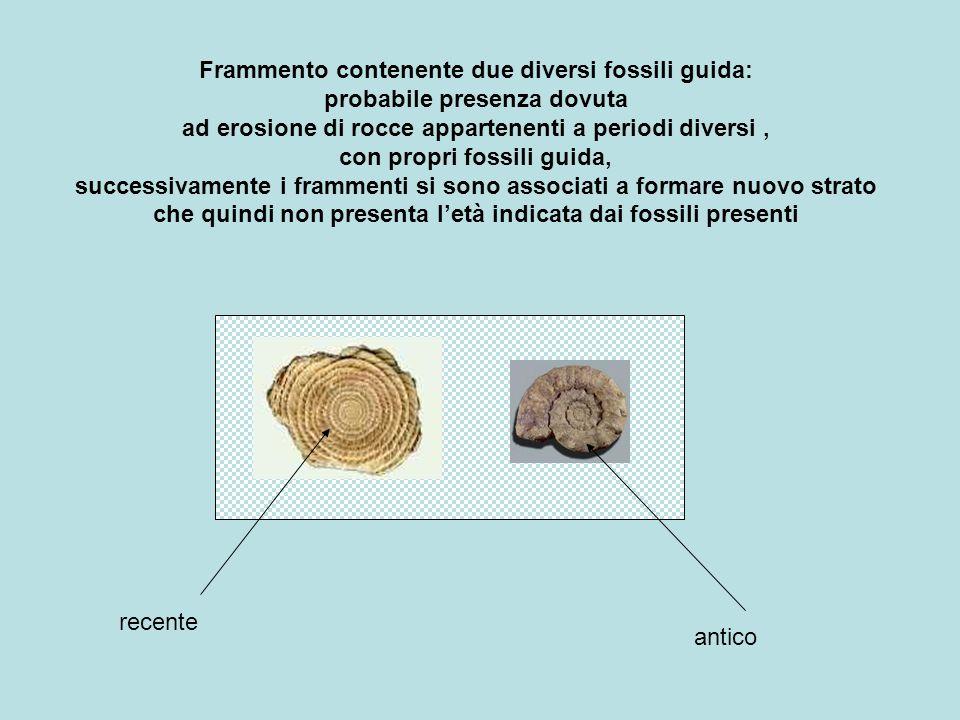Frammento contenente due diversi fossili guida: probabile presenza dovuta ad erosione di rocce appartenenti a periodi diversi , con propri fossili guida, successivamente i frammenti si sono associati a formare nuovo strato che quindi non presenta l'età indicata dai fossili presenti