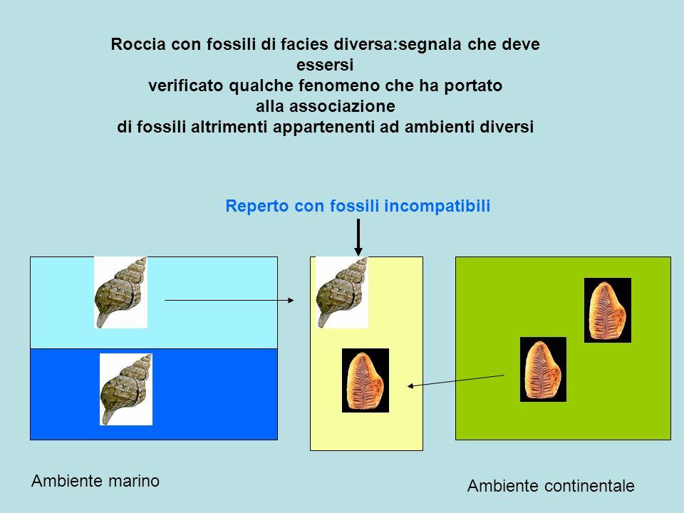 Roccia con fossili di facies diversa:segnala che deve essersi verificato qualche fenomeno che ha portato alla associazione di fossili altrimenti appartenenti ad ambienti diversi