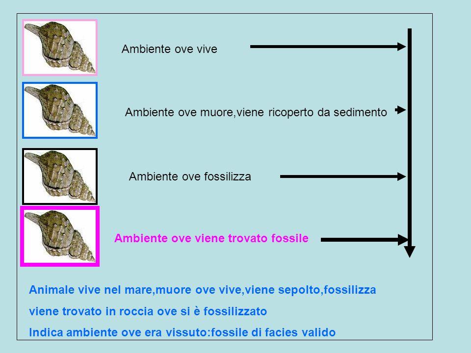 Ambiente ove viveAmbiente ove muore,viene ricoperto da sedimento. Ambiente ove fossilizza. Ambiente ove viene trovato fossile.