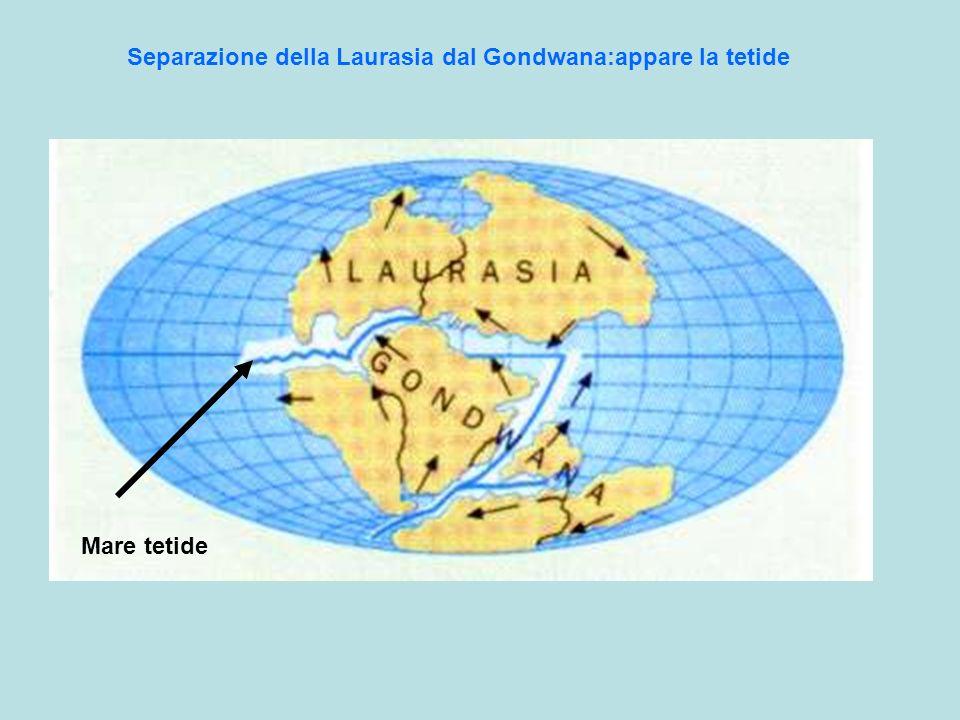 Separazione della Laurasia dal Gondwana:appare la tetide