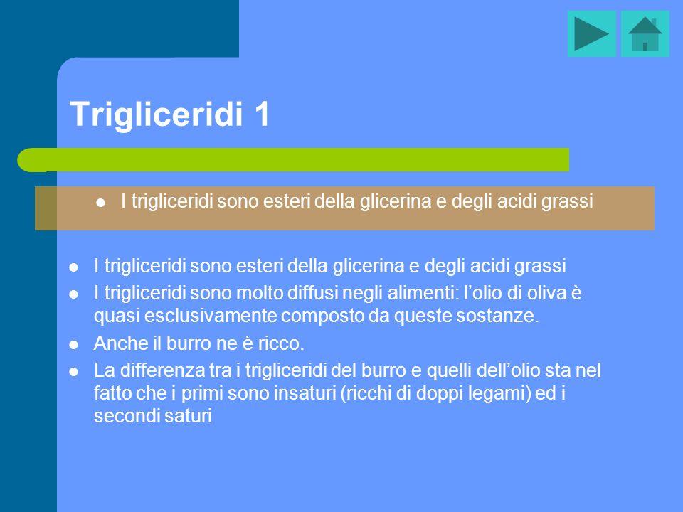 I trigliceridi sono esteri della glicerina e degli acidi grassi