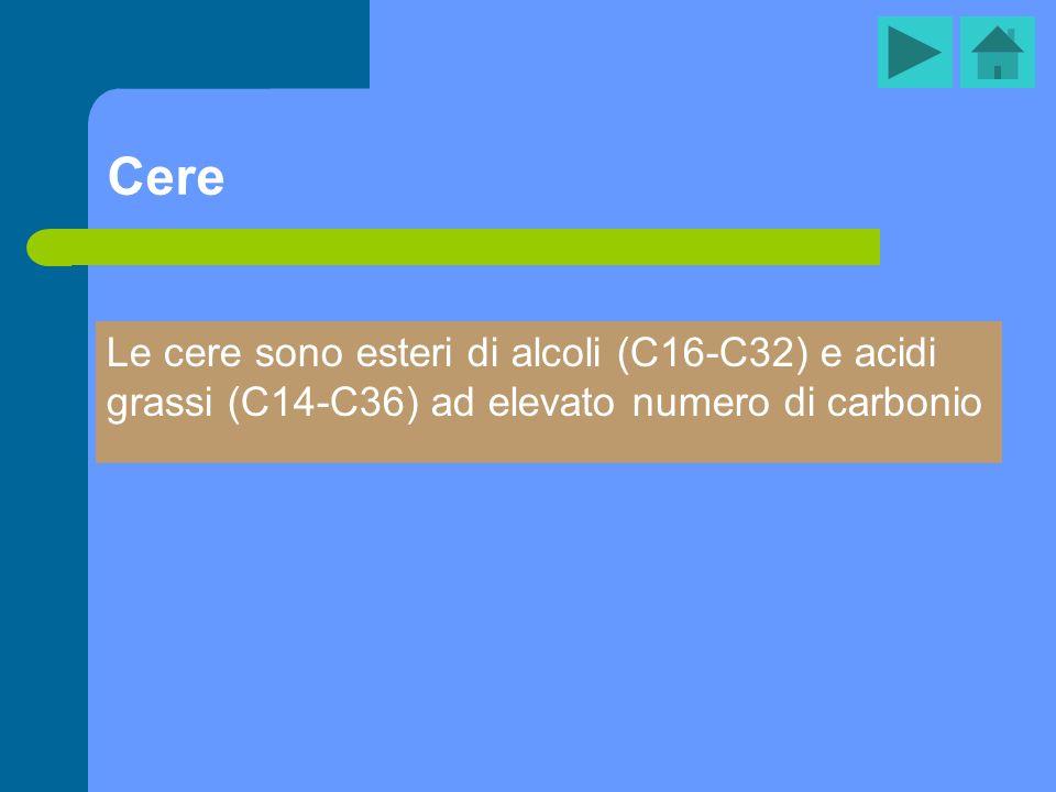 Cere Le cere sono esteri di alcoli (C16-C32) e acidi grassi (C14-C36) ad elevato numero di carbonio