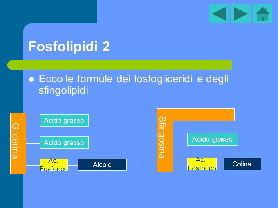 Fosfolipidi 2 Ecco le formule dei fosfogliceridi e degli sfingolipidi